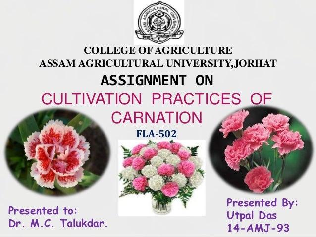 ASSIGNMENT ON CULTIVATION PRACTICES OF CARNATION FLA-502 COLLEGE OFAGRICULTURE ASSAM AGRICULTURAL UNIVERSITY,JORHAT Presen...