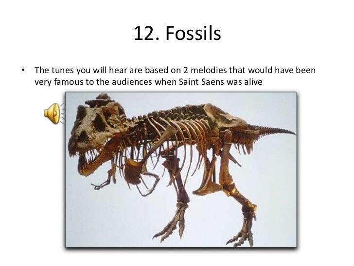 Fossils: Carnival Of The Animals Fossils