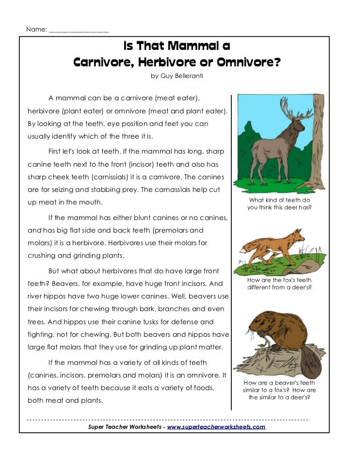 Name: ___________________                       Is That Mammal a               Carnivore, Herbivore or Omnivore?          ...