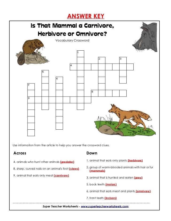 Carnivores herbivores-or omnivore