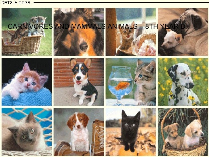 CARNIVORES AND MAMMALS ANIMALS – 8TH YEAR D