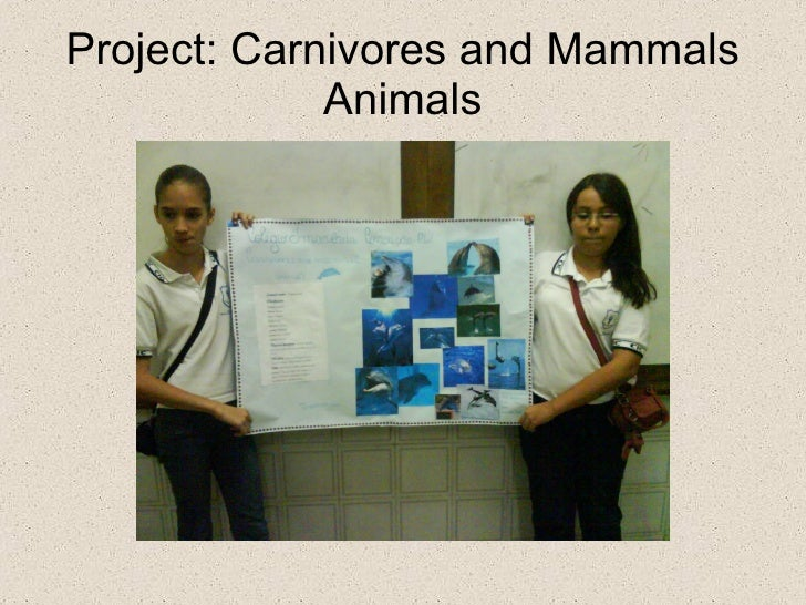 project carnivore Interns will also assist with and gain experience in other aspects of the long-term fisher research project including setting and monitoring live traps, assisting experienced personnel at captures, monitoring fishers using telemetry, data entry, and other tasks associated with maintaining the field project.