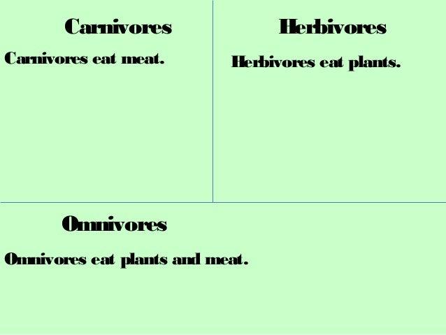 Carnivores herbivores omnivores_KAH