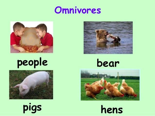 Carnivores Herbivores Omnivores With Examples