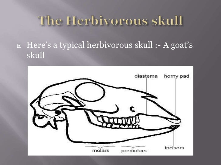 plant anatomy functions with Carnivorous Herbivorous Skulls on Leaf 29294094 together with 6450 further Botany Anatomy Jan 2012 additionally Male Reproductive System Parts And Functions Tagalog also Male Reproductive System Scrotum Epididymis Vasdeference.