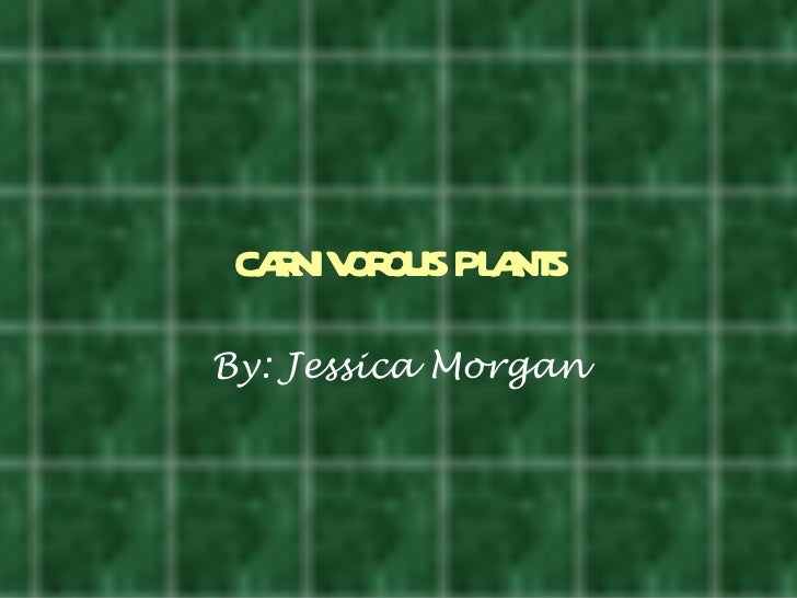 caniv ous pl nt   r or a sBy: Jessica Morgan