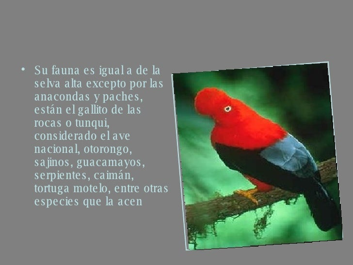 Plantas De Selva Alta: Selva Baja