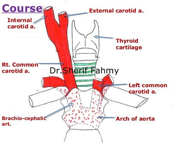 Carotid artery anatomy ppt