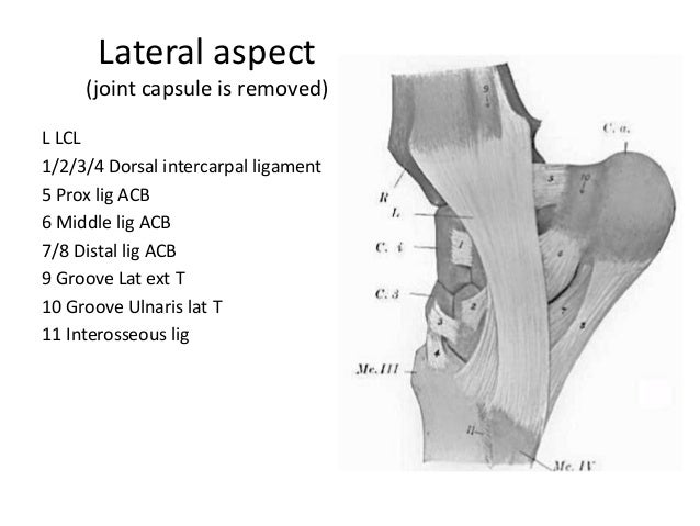 Diagram Of Equine Carpal Joint - Block And Schematic Diagrams •