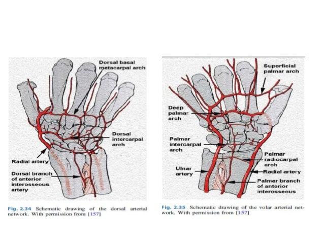 anatomy of wrist and carpal bones
