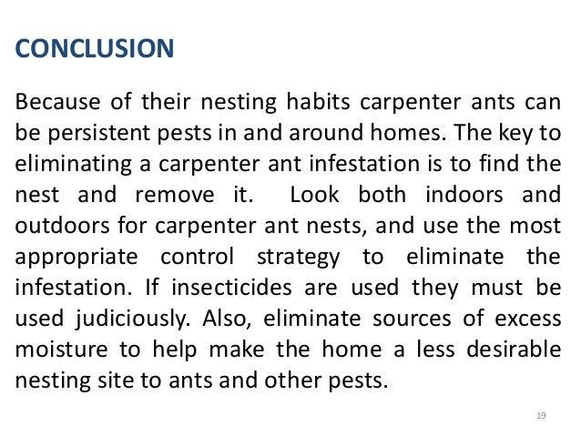 Carpenter Ants Seminar Work By Uwamose Martins