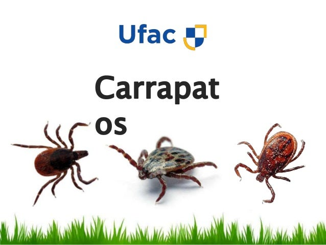 Reino: Animalia Filo: Arthropoda Subfilo: Chelicerata Classe: Arachnida Ordem: Acari Subordem: Ixodides Familias: Ixodidae...