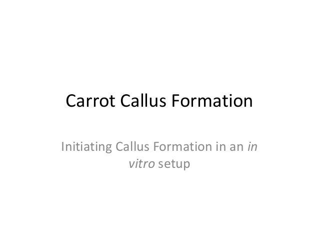 Carrot Callus FormationInitiating Callus Formation in an invitro setup