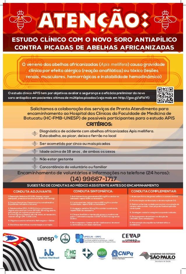 Estudo clínico com o novo soro antiapílico contra picadas de abelhas africanizadas Estudo clínico com o novo soro antiapíl...