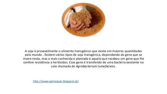 A soja é provavelmente o alimento transgénico que existe em maiores quantidadespelo mundo . Existem vários tipos de soja t...