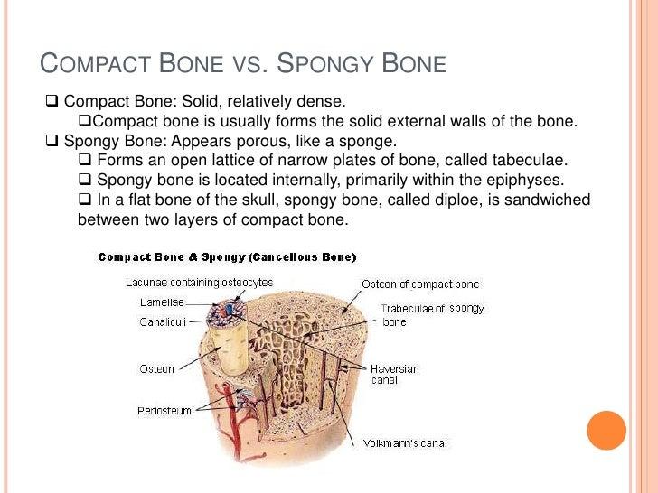 Cartilage Bone Connective Tissue