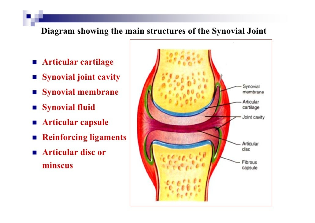 Cartilage Joints Joints hold the skeleton together and support movement. cartilage joints