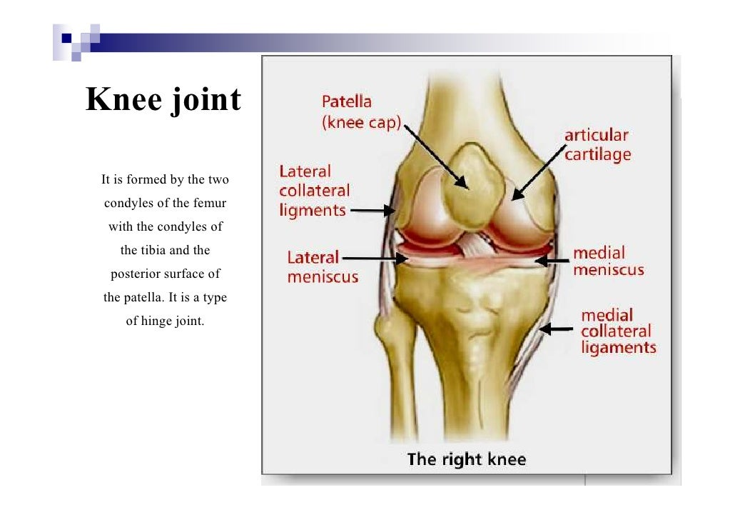 Cartilage & joints
