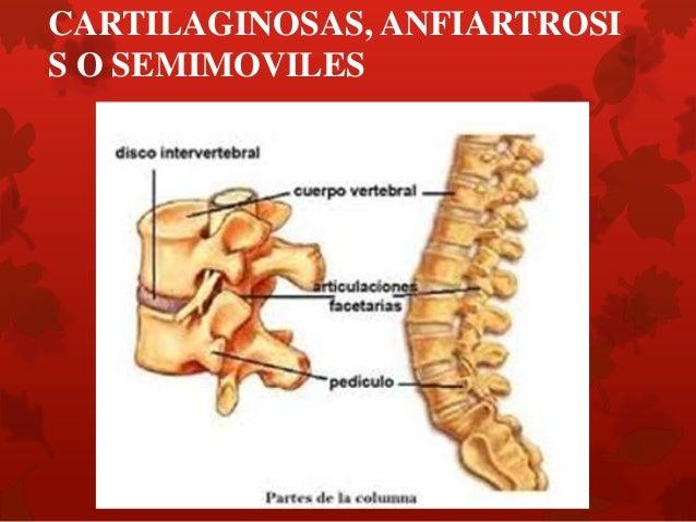 CARTILAGINOSAS, ANFIARTROSIS O SEMIMOVILES