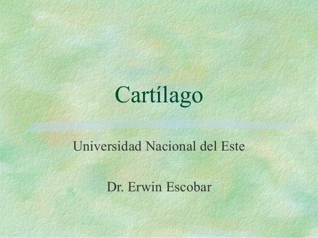 CartílagoUniversidad Nacional del Este     Dr. Erwin Escobar