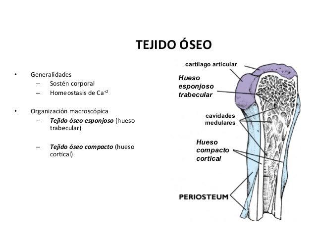 Cartilago y hueso_vet_2015