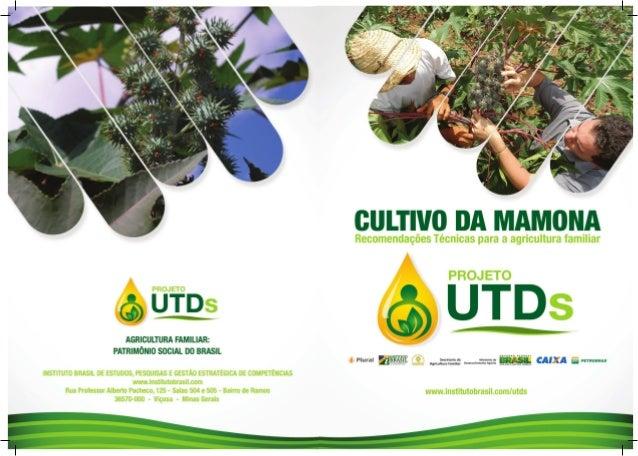 EXPEDIENTE A cartilha O Cultivo da Mamona – Recomendações técnicas para a agricultura familiar é um produto do PROJETO UTD...