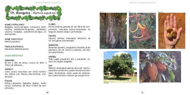 NOMES POPULARES Monguba, cacau-selvagem, mamorana, embi- ratanha, castanheiro-da-guiana, castanhola, carolina, munguba, ca...
