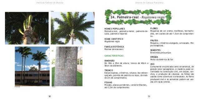 NOMES POPULARES Palmeira-real, palmeira-mater, palmeira-de- cuba, palmeira-imperial NOME CIENTIFICO Roystonea regia FAMÍLI...