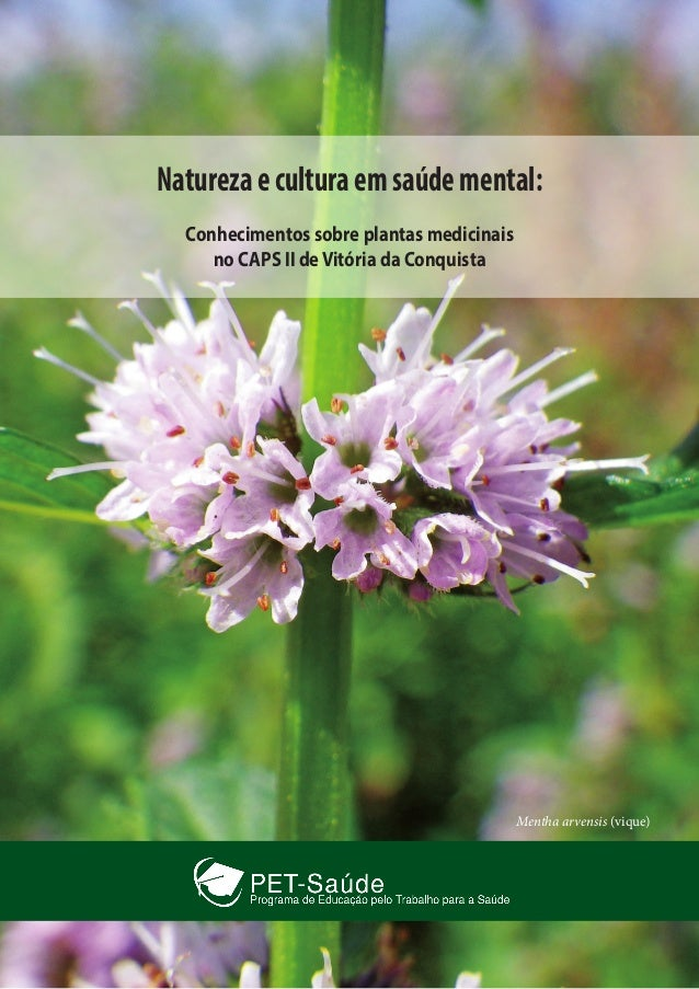 Naturezaeculturaemsaúdemental: Conhecimentos sobre plantas medicinais no CAPS II deVitória da Conquista Mentha arvensis (v...