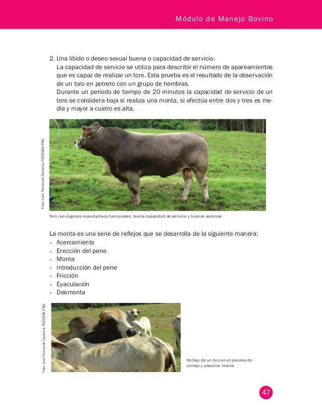 Cartilla modulo manejo_bovino