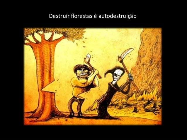 Destruir florestas � autodestrui��o