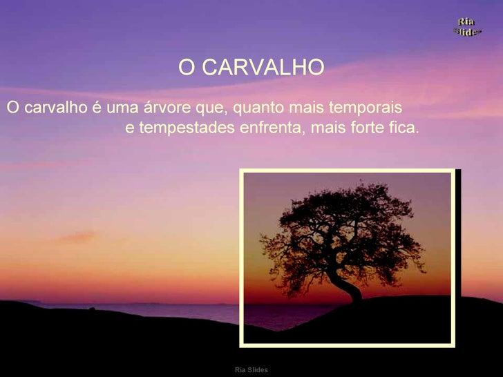 O carvalho é uma árvore que, quanto mais temporais  e tempestades enfrenta, mais forte fica. O CARVALHO .