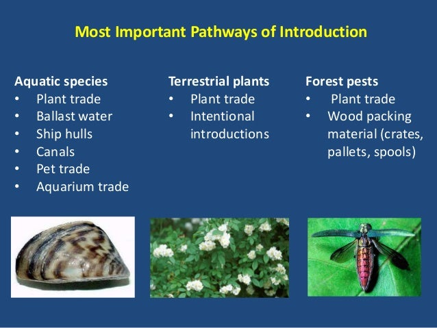 """the impact of invasive species in an ecosystem And invasive alien species  """"the adverse impact of invasive species can impede  cabi has led fundamental research on how species within an ecosystem."""