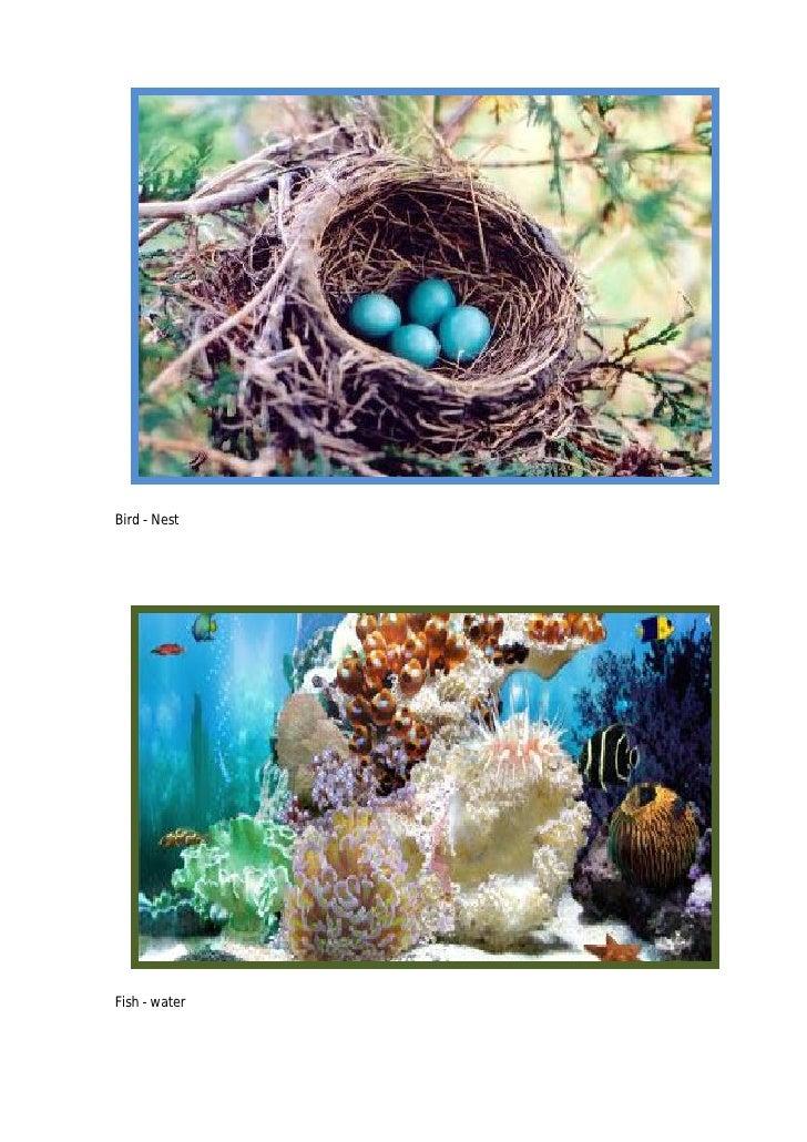 Bird - Nest     Fish - water