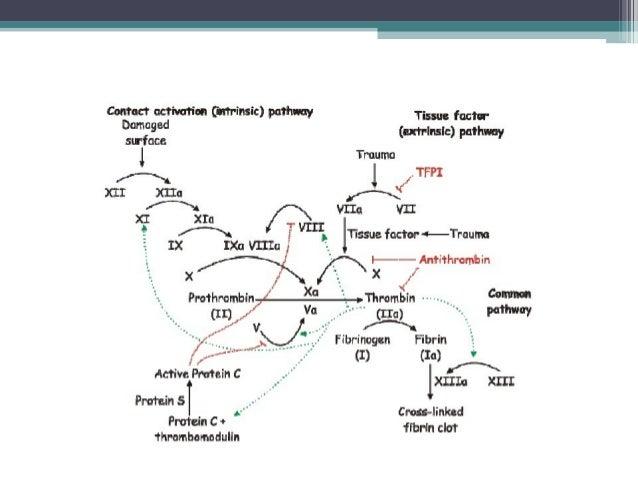 VÌA COMÙNLa vía común es el punto de la cascada de lacoagulación en el cual convergen tanto la vía extrínsecacomo la vía i...