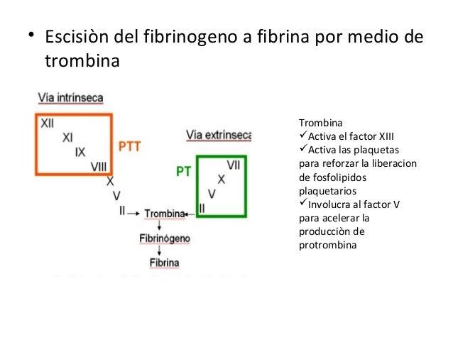 Factores de Coagulación.• Compuestos que participan en la hemostasia.12 proteínas Iones Ca2+ y fosfolípidos• Nombrados del...