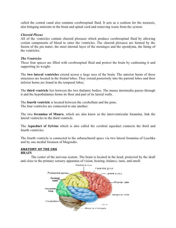 Meningitis nursing case study
