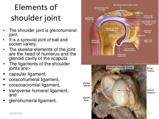 Case Based Learning Joints Of Upper Limb