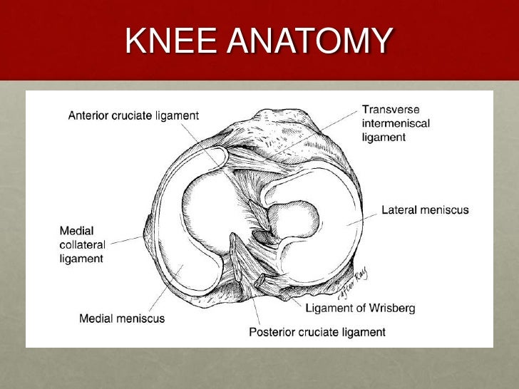 knee injury case studies