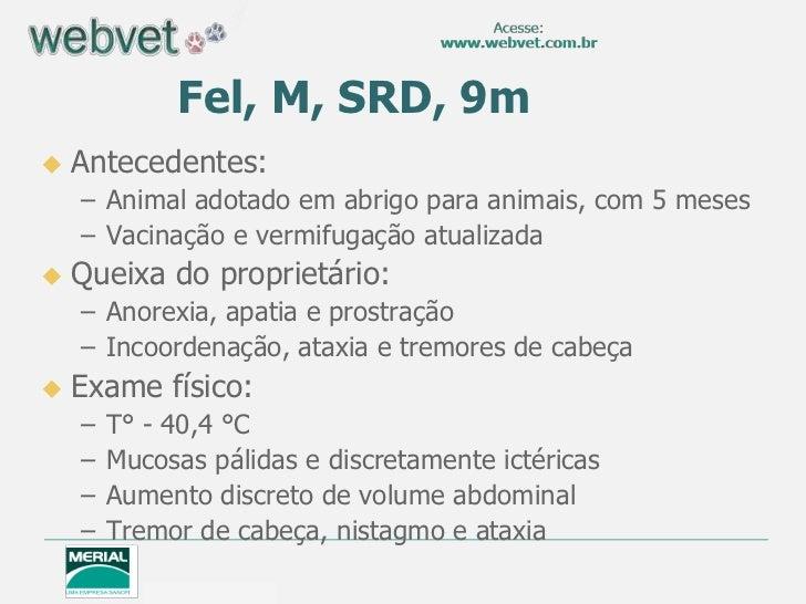 Fel, M, SRD, 9m   Antecedentes:    – Animal adotado em abrigo para animais, com 5 meses    – Vacinação e vermifugação atu...