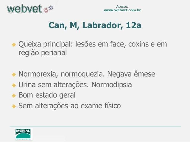 Can, M, Labrador, 12a   Queixa principal: lesões em face, coxins e em    região perianal Normorexia, normoquezia. Negava...