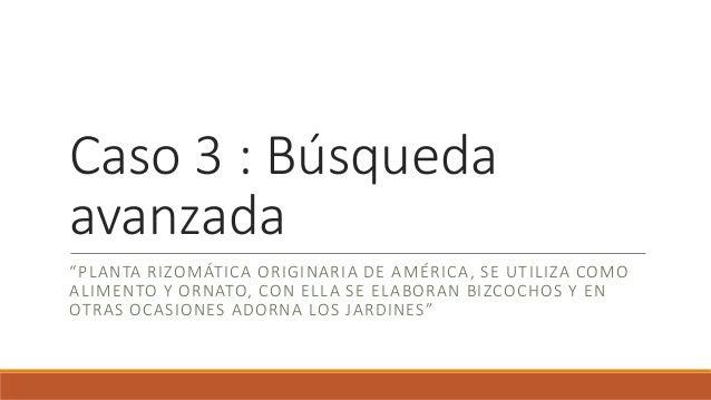 """Caso 3 : Búsqueda avanzada """"PLANTA RIZOMÁTICA ORIGINARIA DE AMÉRICA, SE UTILIZA COMO ALIMENTO Y ORNATO, CON ELLA SE ELABOR..."""