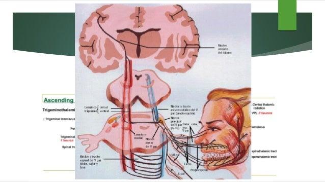 Valoración Preanestésica •Embolectomia – Resección tumor frontal izquierdo •Procedimiento electivo Programación •Hipotiroi...