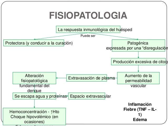 Fisiopatologia del dengue hemorragico pdf writer