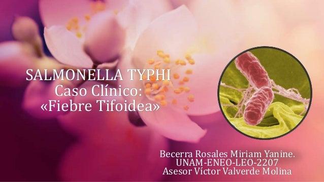 SALMONELLA TYPHI    Caso Clínico:  «Fiebre Tifoidea»                 Becerra Rosales Miriam Yanine.                    UNA...
