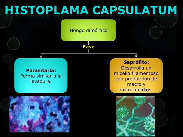 Capsulatum