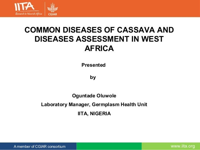 www.iita.orgA member of CGIAR consortium COMMON DISEASES OF CASSAVA AND DISEASES ASSESSMENT IN WEST AFRICA Presented by Og...