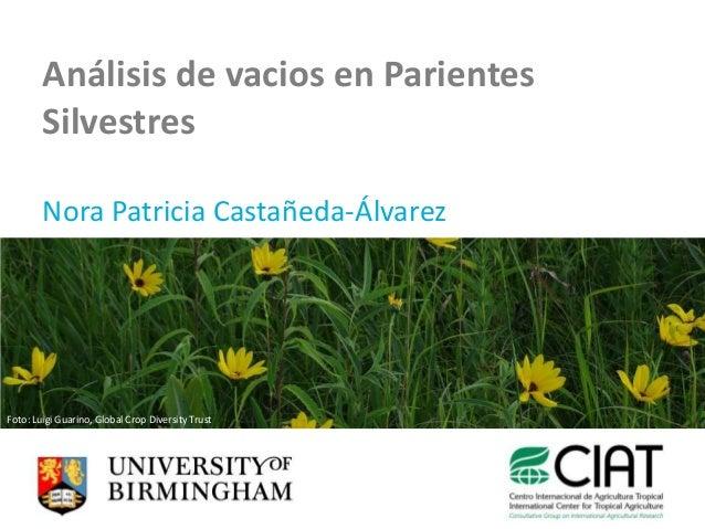 Análisis de vacios en Parientes        Silvestres        Nora Patricia Castañeda-ÁlvarezFoto: Luigi Guarino, Global Crop D...