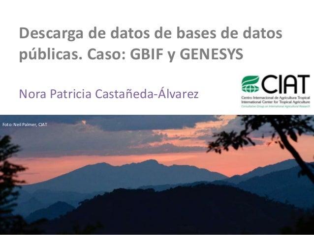 Descarga de datos de bases de datos        públicas. Caso: GBIF y GENESYS        Nora Patricia Castañeda-ÁlvarezFoto: Neil...