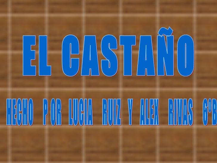 EL CASTAÑO HECHO  P OR  LUCIA  RUIZ  Y  ALEX  RIVAS  6ºB